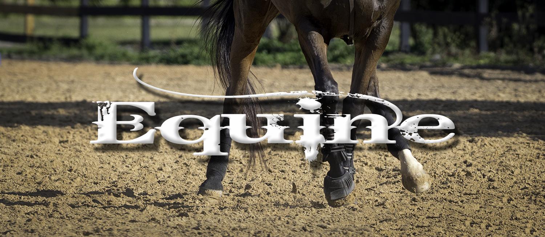 equine_header