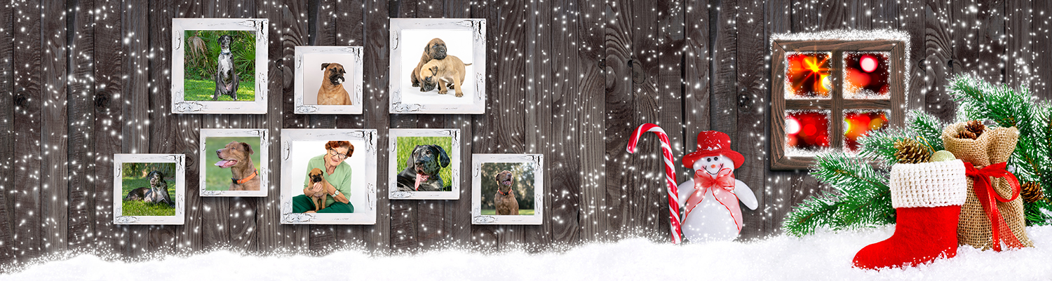 Christmas banner with eight empty photo frames, Snowman with candy cane, Santa boot, bag with gifts and cones on wooden wall background and glowing lights outside the window